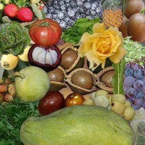 אורגניקו - כל מה שצריך לדעת על צמח