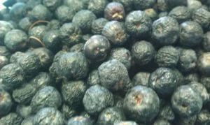 ארוניה גידול פירות