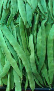 שעועית ירוקה גידול
