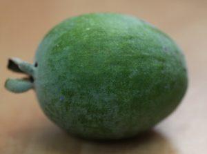 פיג'ואה גידול פרי