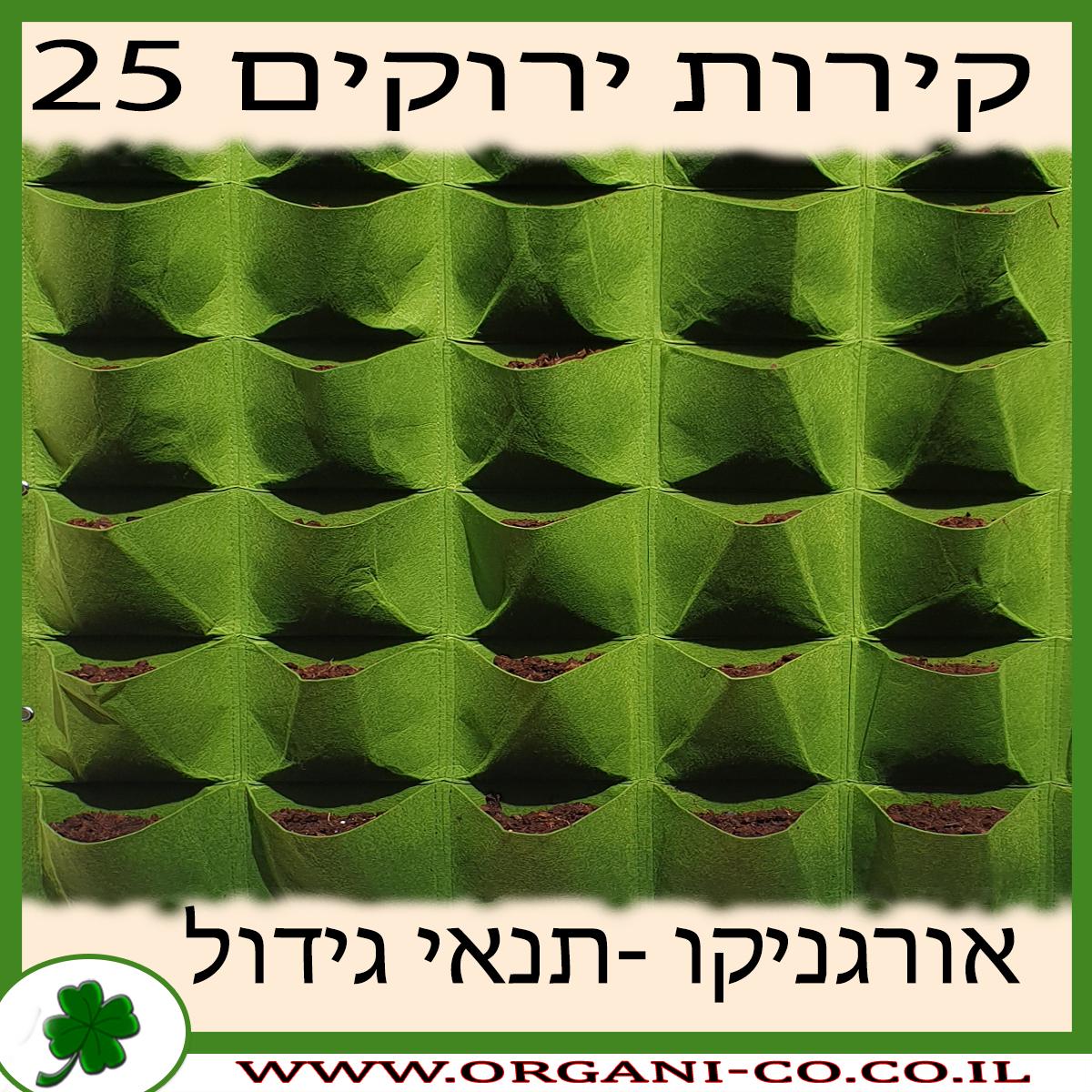 קיר ירוק 25