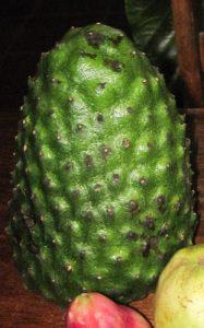 גואנבנה - גרביולה צמח גידול