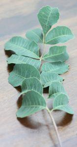 אמרולה צמח
