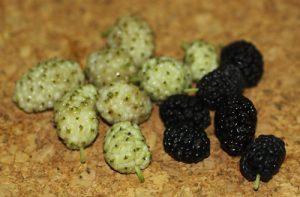 תות עץ גידול פירות שחורים לבנים
