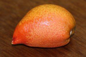 פרי חמאת בוטנים עץ פרי