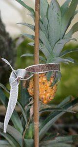 אננס גידול צמח פרי