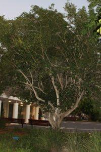 פיטנגה גידול פירות עץ
