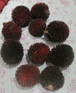 פולסאן גידול צמח פירות