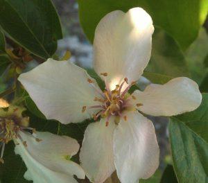 חבוש עץ גידול פרחים