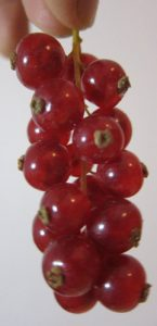 דומדמניות צמח פירות