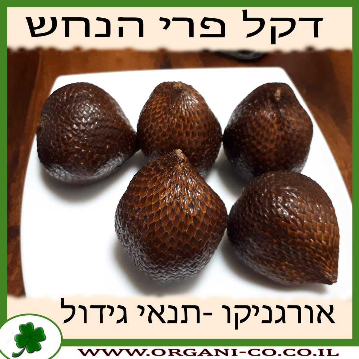 דקל פרי הנחש - סלאק - תנאי גידול