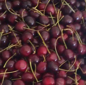דובדן גידול עץ פרי