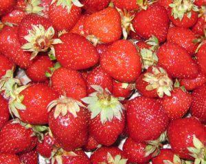תות שדה גידול צמח