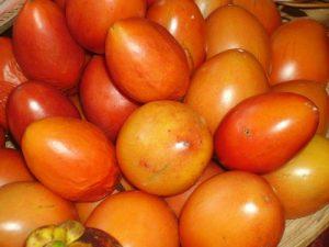 טמרילו גידול פרי