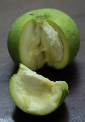 ספוטה לבנה גידול פרי עץ