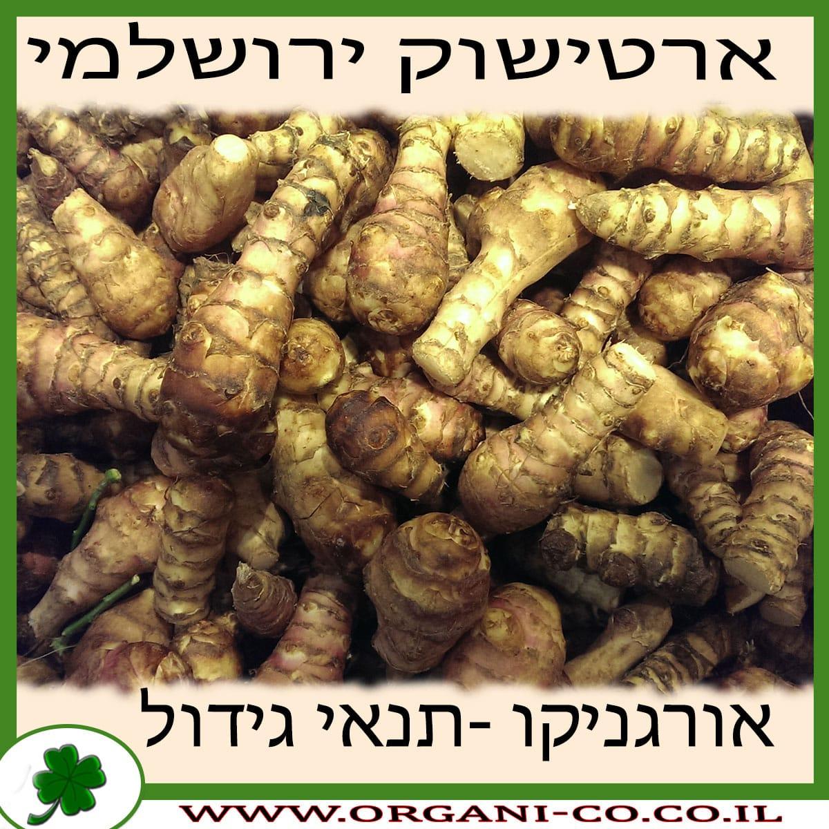 ארטישוק ירושלמי גידול צמח