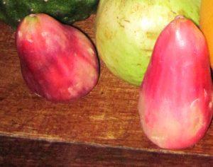 תפוח מלאי גידול