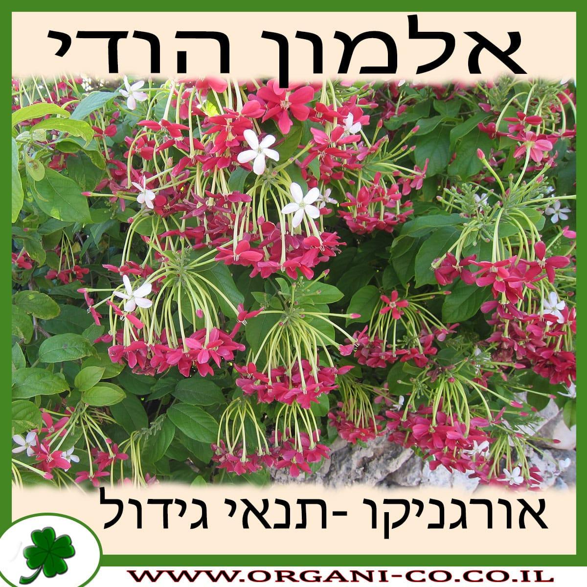 אלמון הודי גידול צמח