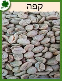 שתילי עץ קפה