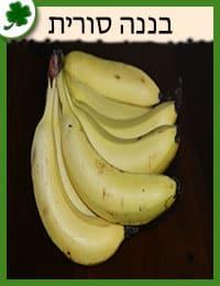 שתילי בננה סורית